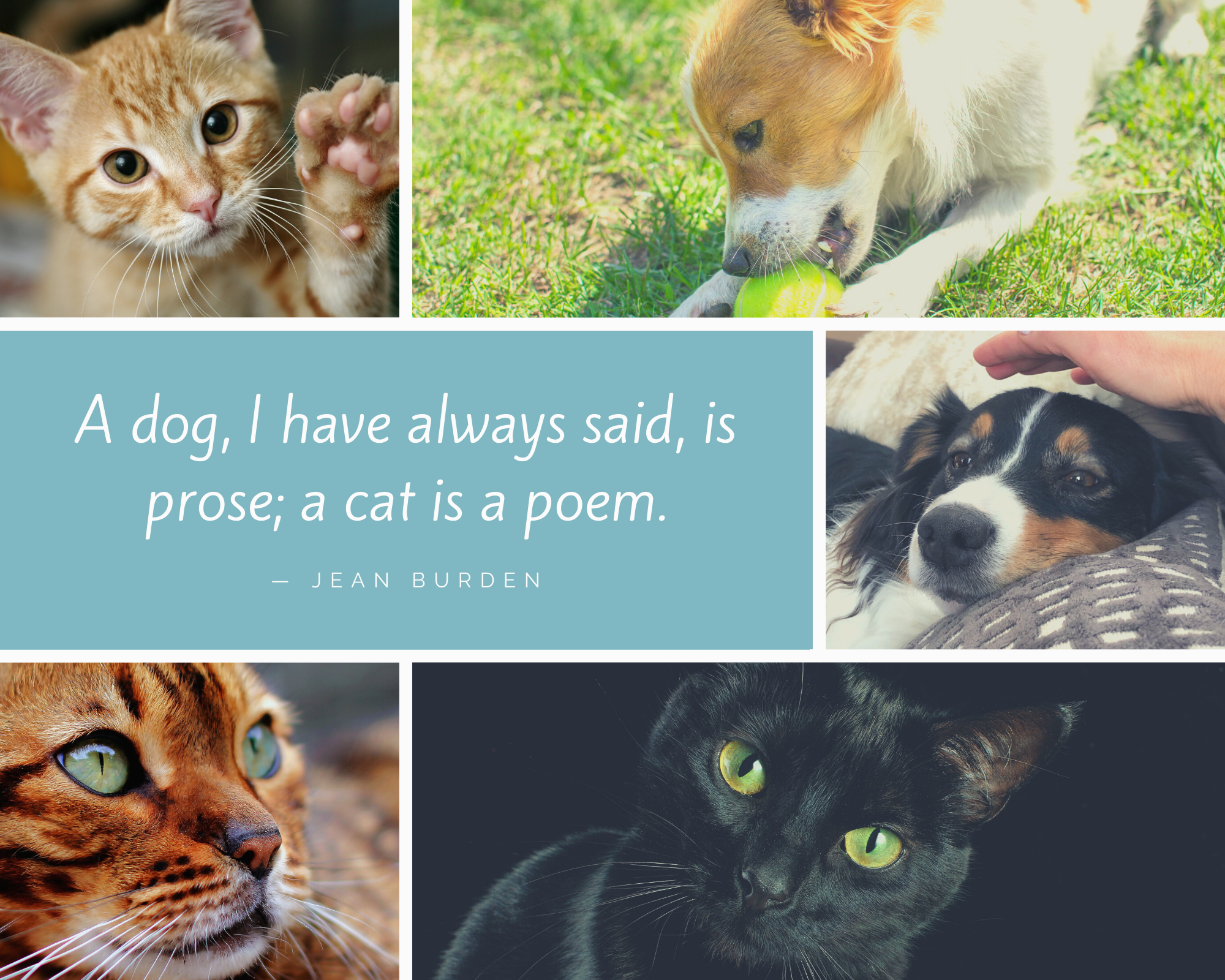 Teal Cat Quote Photo Collage