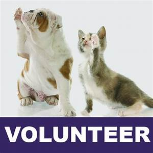 kitten bulldog volunteer