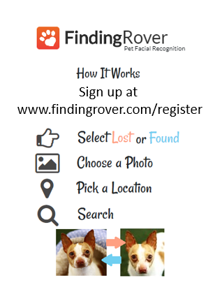 Dog - Lost and Found